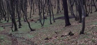 ZECI DE ACŢIUNI ALE POLIŢIŞTILOR CLUJENI PENTRU  PROTEJAREA FONDULUI FORESTIER