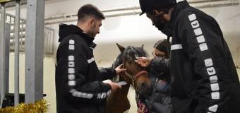 Eston, calul de cinci ani pentru care a avut loc o strângere de fonduri, a fost  operat cu succes.