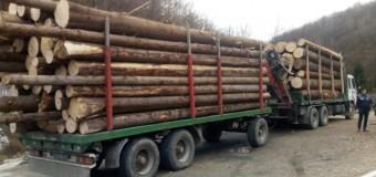 Bărbați reținuți pentru tăiere dără drept de arbori și furt de arbori, fals intelectual și uz de fals