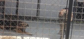 280 de căței de la Centrul de gestionare câini fără stăpân Cluj-Napoca așteaptă să fie adoptați
