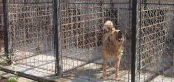 Floreștiul va avea Serviciu de gestionare a câinilor fără stăpân. Ce activități se vor desfășura și ce costuri va presupune?