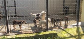 """""""Ziua porților deschise"""" la Centrul de Întreținere și Adăpost Câini Fără Stăpân"""