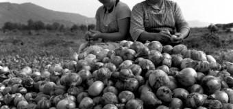 """""""De unde ne hrănim""""- expoziţie foto inedită cu muncitori agricoli clujeni dinainte de 1989"""