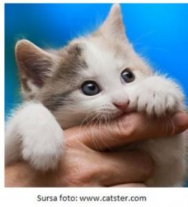 boala pisicii