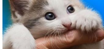 Ce sa fac, doctore? Tot ce trebuie sa stie un parinte despre Boala zgarieturii de pisica