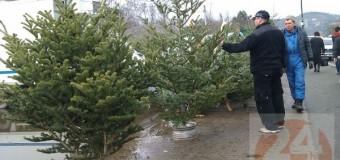 Cluj: Pomi de Crăciun confiscați și sancțiuni contravenționale aplicate de polițiștii clujeni.