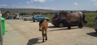 Caii sunt la ei acasă printre blocurile din Floreşti