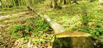 """""""Action Day- Forestry"""" -amenzi și material lemnos confiscat."""