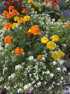 flori copac