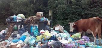 Florești: Consilierii locali pun piciorul în prag. Momentul adevărului e aproape!