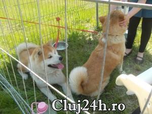 hiperparada animalelor 11