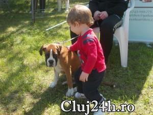 hiperparada animalelor 12