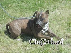 hiperparada animalelor 21