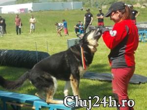 hiperparada animalelor 23