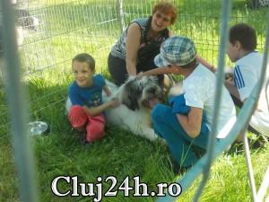 hiperparada animalelor 3