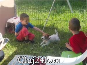 hiperparada animalelor 4