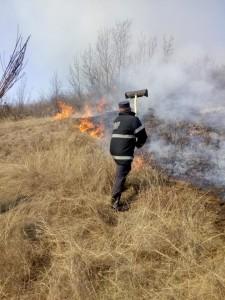 incendii vegetale 1