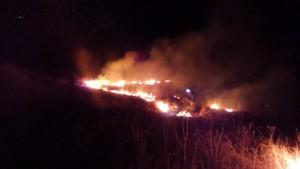 incendii vegetale 2