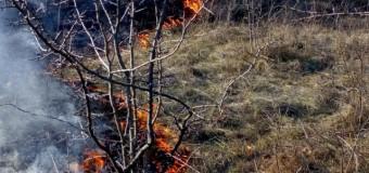Reguli privind arderea vegetației uscate