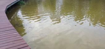 Un consilier local îi cere lui Boc să dispună curăţarea lacului de lângă mall-ul din Gheorgheni