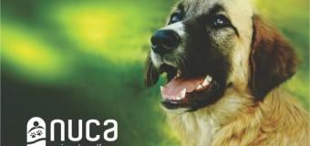 Campanie de sterilizare și microcipare a câinilor şi pisicilor GRATUITE la Bonţida