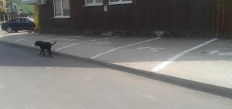 Floreşti: De toată comedia. Au asfaltat strada şi au închis nişte posibile locuri de parcare cu o bordură prea înaltă.