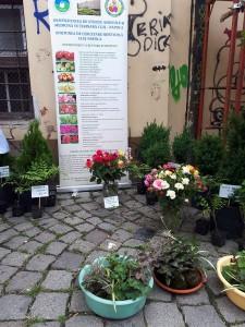 piata flori 1
