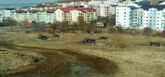 De necrezut! ISC, instituția mai presus de Primăria Florești se chinuie de câteva luni să îl amendeze pe primar.