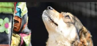 Campanie de sterilizare a câinilor gratuită în perioada 12-14 iunie la Cojocna