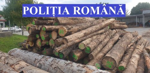 Material lemnos, Cluj24h