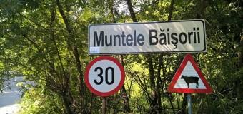 Peste 300 de indicatoare rutiere au fost amplasate pe drumul județean 107R Băișoara – Muntele Băişorii – staţiunea Muntele Băişorii