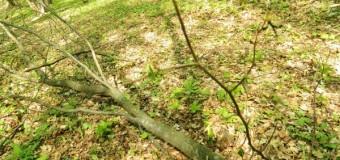 Infringement păduri: Comisia europeana îndeamnă ROMÂNIA să pună capăt exploatării forestiere ilegale