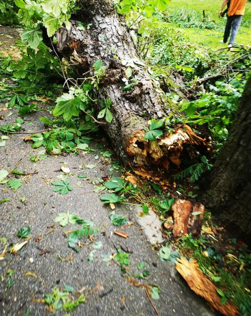 furtună puternică la Cluj-Napoca